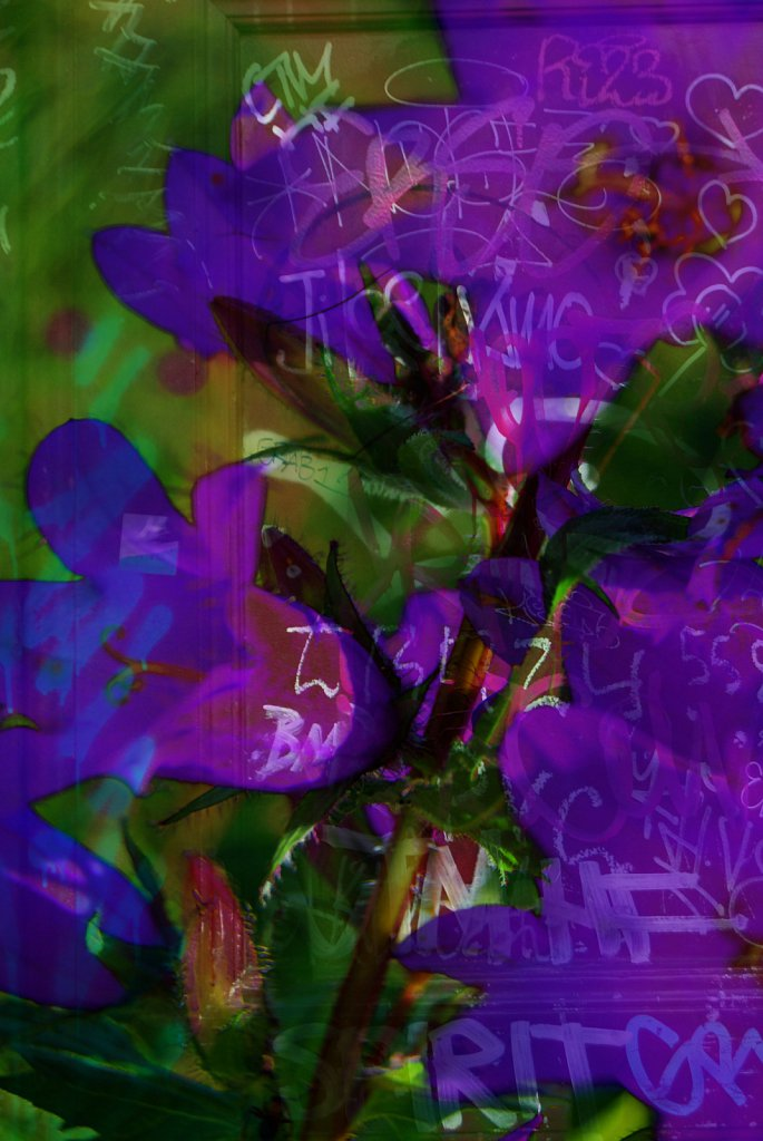 Collage33-Grafitti-meets-flowers.jpg